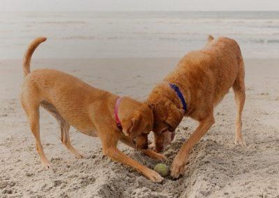 dogs_on_beach_ 2