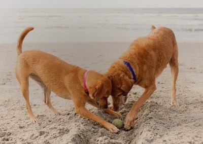 dogs_on_beach_ 2